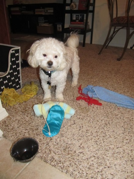 He loves to drag all his toys out and make a mess