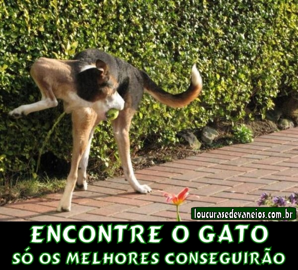 encontre o gato facebook resposta