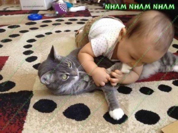 comendo a gata