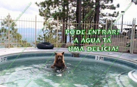 urso piscina