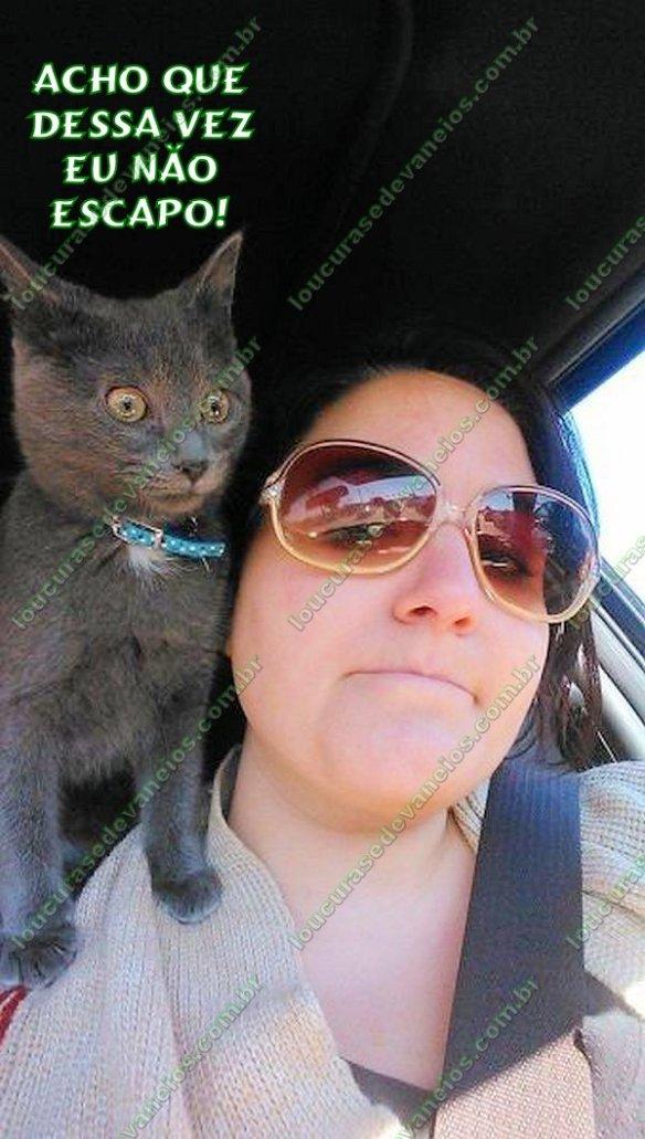 gato mulher motorista