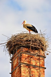 Animals and Your Chimney - Delaware County PA - Lou Curley's Chimney Service