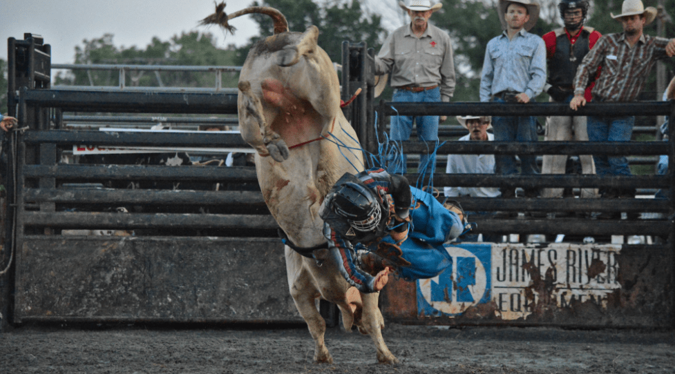 PHOTO GALLERY: A Livestock Auction and Bucking Bulls at the