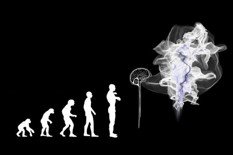 Evolution-singe-homme