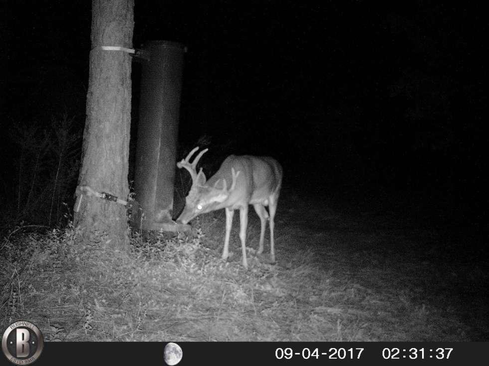 Affordable Durable Gravity Deer Feeders