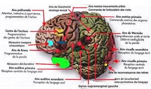 Sciences cognitives : la grande importance de  l'interconnexion  entre la communication écrite et la communication verbale