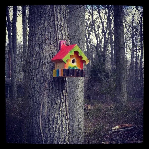 My grandsons build me a bird house. Thanks Cole. Have happy birthday too