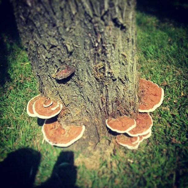 #mushrooms magic