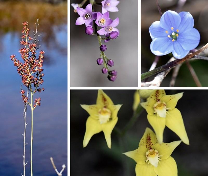 My Week: Wildflowers and Writing