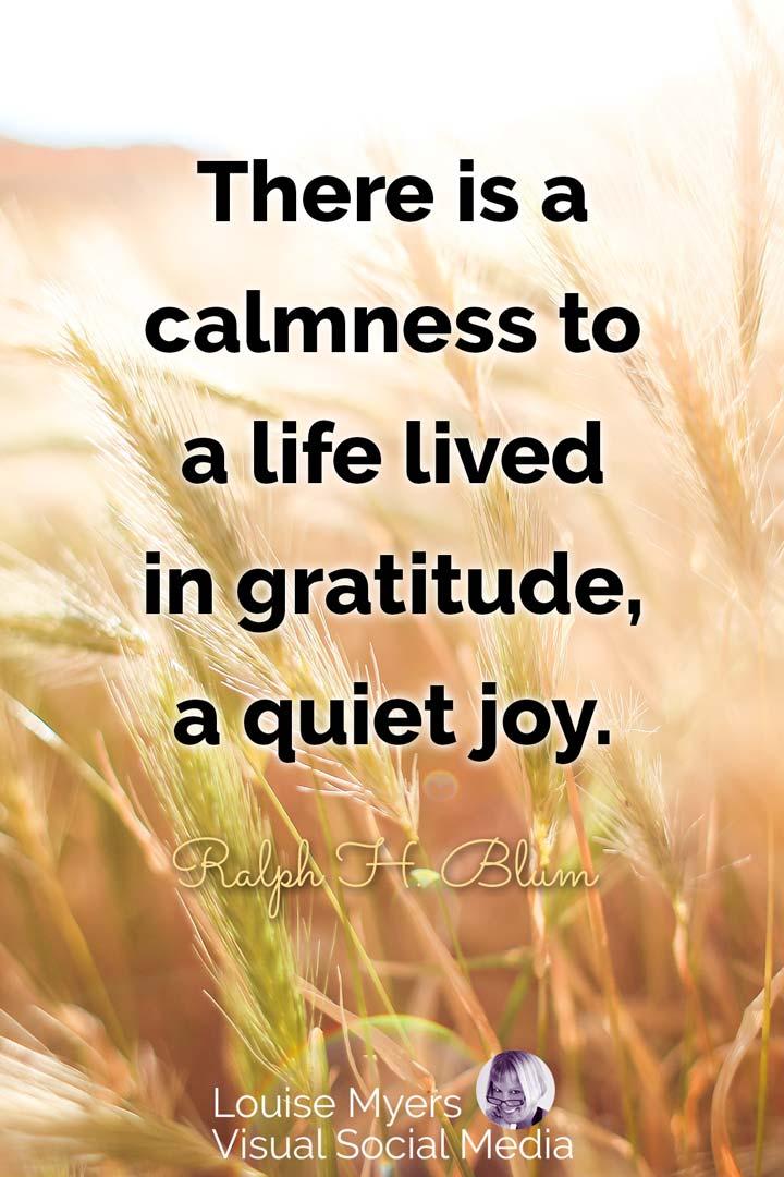 Gratitude Quotes Images : gratitude, quotes, images, These, Gratitude, Quotes, Images, Happy
