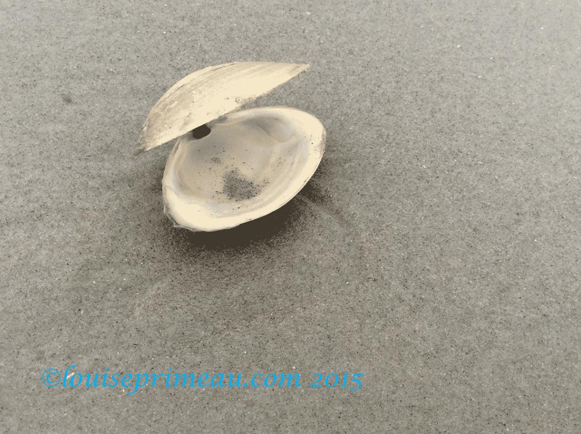 open sea shell