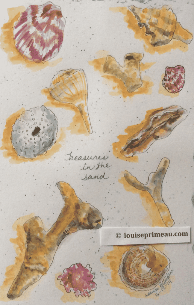 sketchbook sea shells