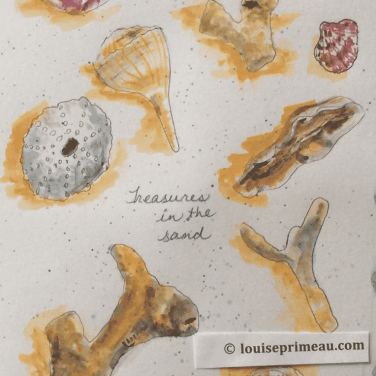 journal sketch collection of seashells