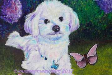 Custom pet portrait of Havanese