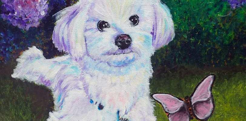Custom pet portrait of Havanese