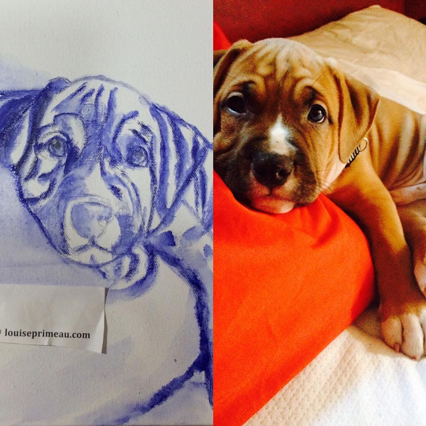 Initial sketch of laid back puppy on canvas
