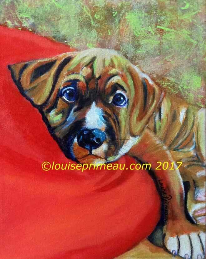 Tony the American Bulldog puppy portrait