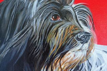 Dutch Sheep Dog Pet Portrait Commissioned
