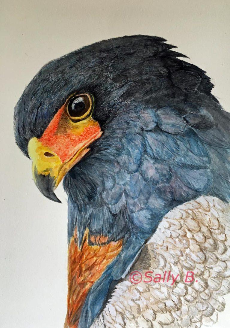 Sally Burke's eagle