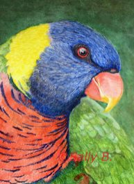 Sally Burke's Rainbow Lorikeet