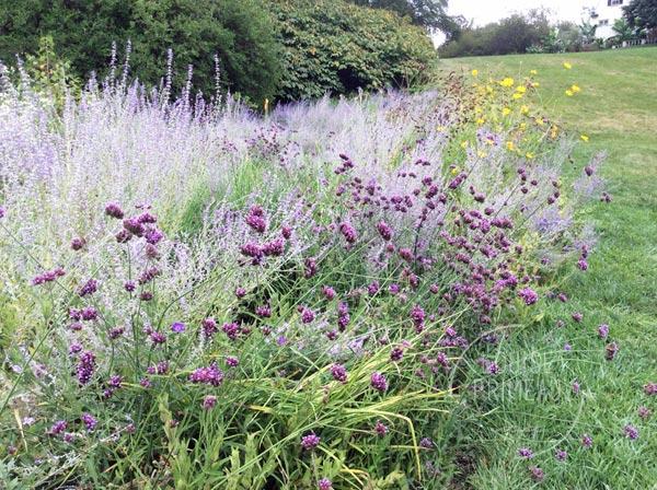 soft purples at Chanticleer estate