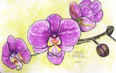 orchids sketched and painted