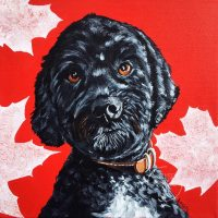 Nala, a most devoted companion to a Canadian war vet.