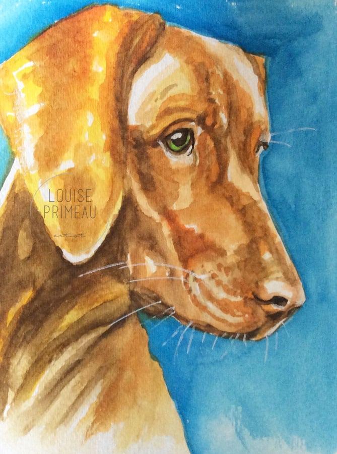 Bowzer, original pet portrait watercolour painting