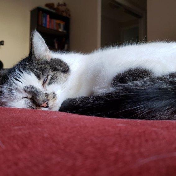 Iggy sleeping