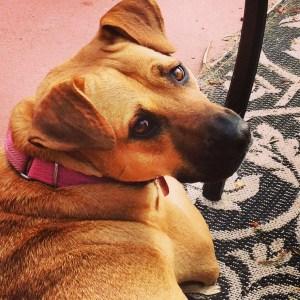 Meet Bayla Scout Sattler