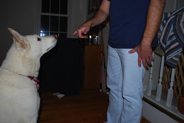 Dog-stay