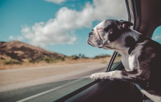 Visual of dog looking out window of a speeding car