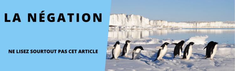 titre pingouins