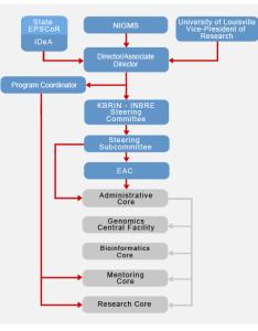 Organizational chart also  kentucky biomedical research infrastructure rh louisville