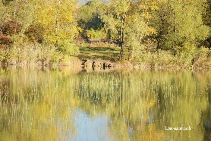 Lac et roseaux