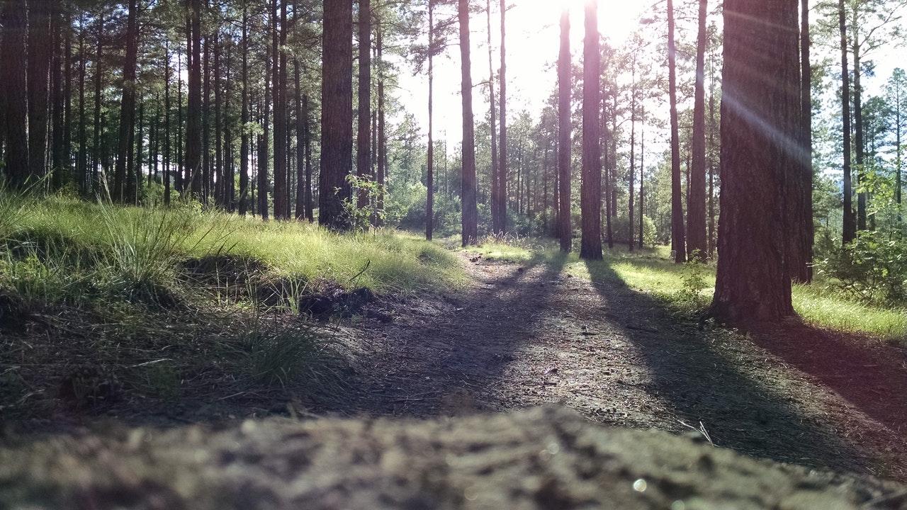 Juhtkogu kogunes metsanduse arengukava koostamise vahekokkuvõtteks