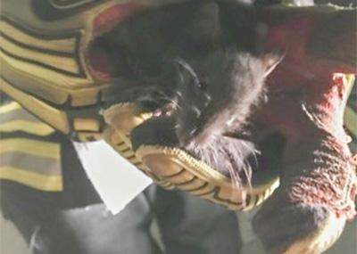 Päästjad püüdsid Võru linnast kinni roti