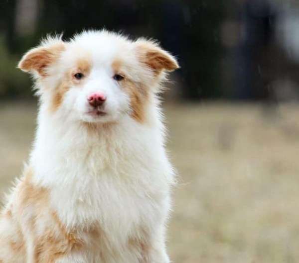 Obinitsa kolinud Epp Petrone on hädas Pihkvast toodud koeraga