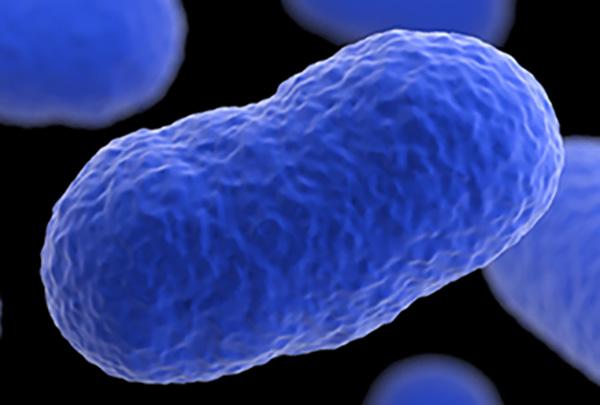 Pealtnägija: M.V. Wooli tehase bakteritüvi põhjustas Eestis vastsündinud surma