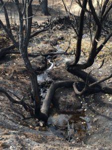 Stream running under burned and broken tree