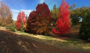Panoramic shot of colorful autumn trees