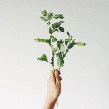 własny ogródek Jak założyć własny ogródek, krótka historia otym 1