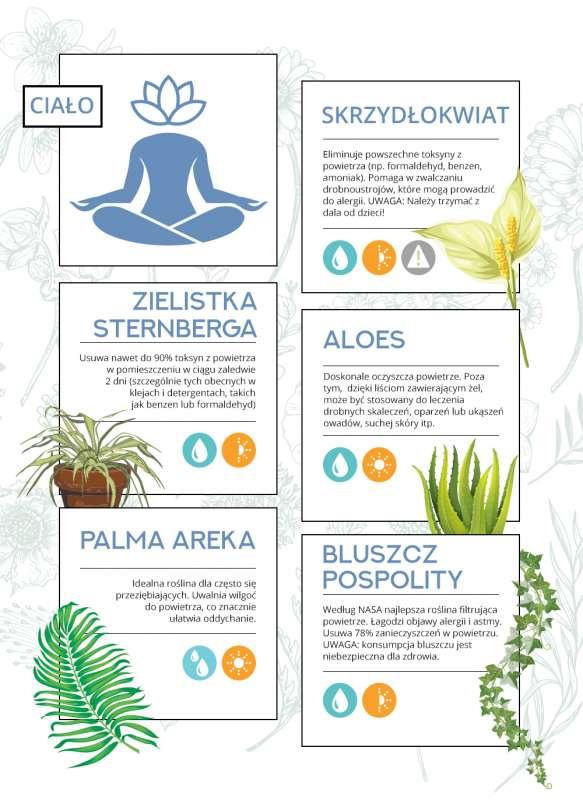 Ukryte supermoce roślin - najlepsze rośliny domowe dla Twojegociała iumysłu Ukryte supermoce roślin - najlepsze rośliny domowe dla Twojegociała iumysłu 2