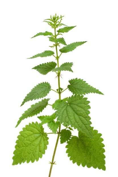 Magiczne zioła irośliny Magiczne zioła irośliny, czyli jak radzić sobie zduchami wkuchni 1