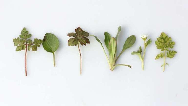 Magiczne zioła i rośliny, czyli jak radzić sobie z duchami w kuchni