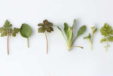 Magiczne zioła irośliny, czyli jak radzić sobie zduchami wkuchni