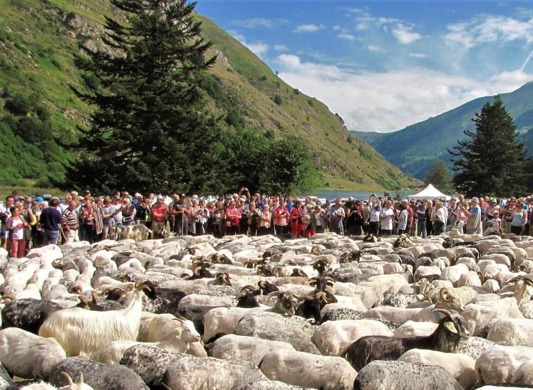 Val d'Azun : la transhumance, un véritable retour aux sources !