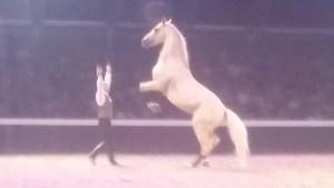 Tarbes : Magnifique «Nuit des créations» pour le 25ème anniversaire d'Equestria