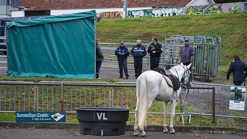 Lourdes : la Foire aux chevaux de la Saint Luc serait-elle en danger ?