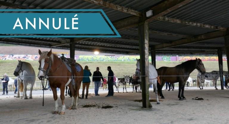 Communiqué de la Mairie : Annulation de la Foire aux chevaux d'avril